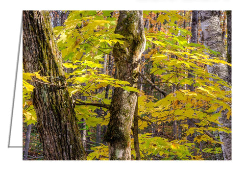 A photo greeting card - Autumn in a Quebec forest