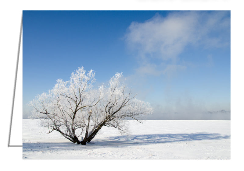 Hoar Frost Tree by the River - Greeting Card