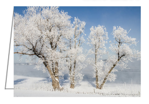 Hoar Frost on Trees - Greeting Card