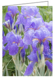 Iris in the rain - Greeting Card.