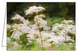 Queen Anne's Lace - Greeting Card.