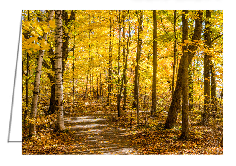 Woodland Trail at Mer Bleue - Greeting Card