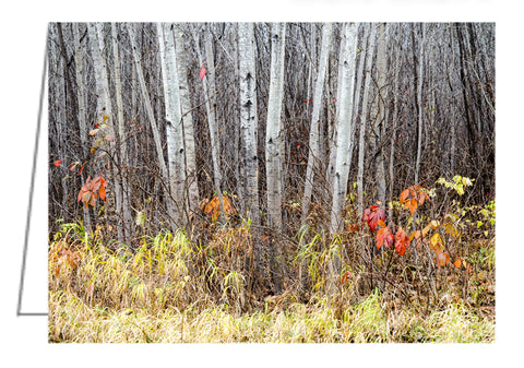 Late Fall Splendour - Greeting Card