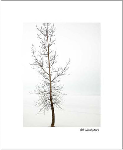 Matted Print - This is a lone tree on the shoreline of the Ottawa River. It stands out strongly against the white snow and the white mist shrouding the river itself.