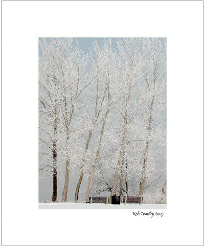 Matted Print - The Ottawa River, completely shrouded in mist. The trees are covered in beautiful hoarfrost.