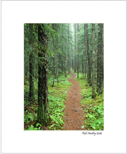 Matted Print - Photographed on a wet and rainy day while hiking to the White River suspension bridge in Pukaskwa National Park.