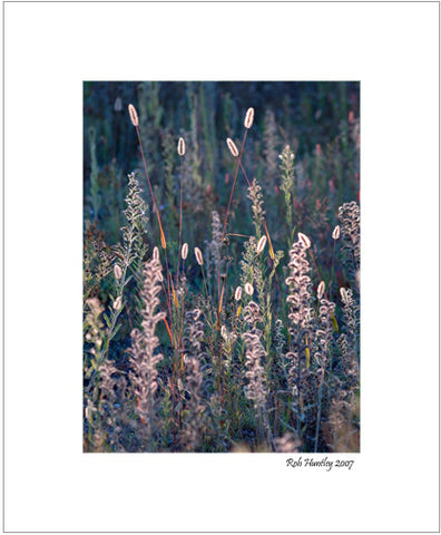 Fall Meadow, Backlit. 8x10 matted print. On sale at Rob's Card and Print shop.