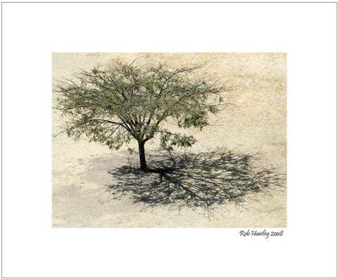 Matted Print - Aerial view of a tree and its shadow at Monte Alban in Mexico.