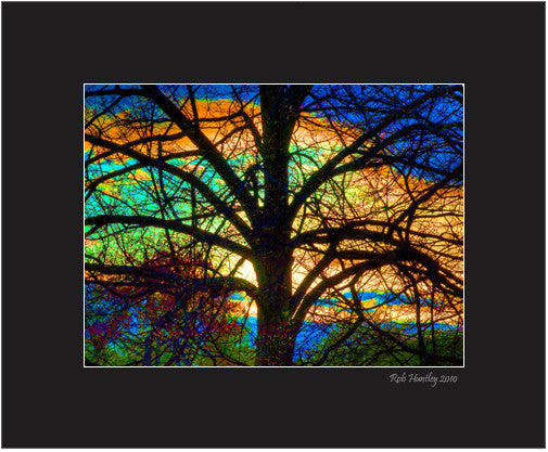 Matted Print - Stained Glass Tree. A tree silhouetted against a colorful sunset and tweaked in PhotoShop to give an impression of stained glass.