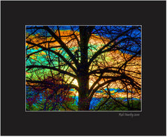 Stained Glass Tree - 8x10 matted print