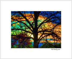 Stained Glass Tree - 8 x 10 matted print.