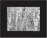 Matted Print - Birch Forest. A simple near shot of the tree trunks, converted to black and white and digitally enhanced to make the photography look more like a sketch or painting.