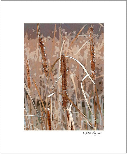 Matted Print - Cattails, or bullrushes, in the late fall, early winter, when completely dried and brown. Digital alteration has been used to give this photograph a painted look.
