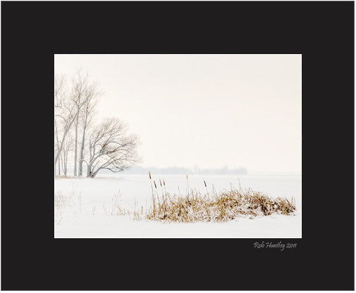 Matted Print - A photograph of cattails on the shoreline.