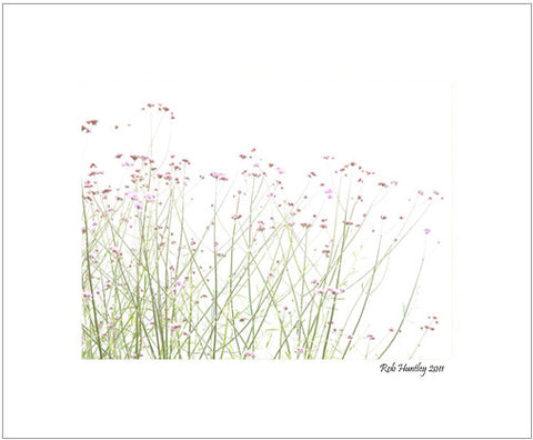 Matted Print - Delicate mauve flowers against a white sky.