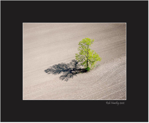 Matted Print - Aerial abstract of a single tree casting a long shadow in a barren corn field in spring.