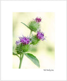 Matted Print - Burdock flowers.
