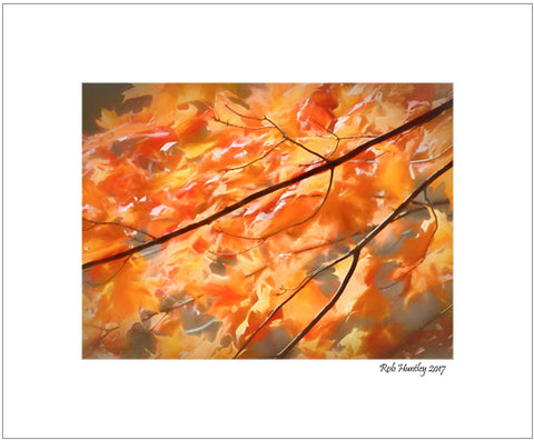 Maple Leaves on Fire. Close-up of maple leaves with art filter post processing.  8 x 10 matted print.