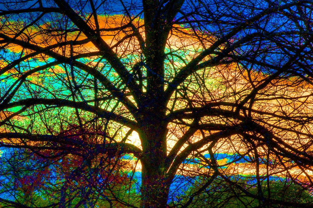 Stained Glass Tree - Greeting Card