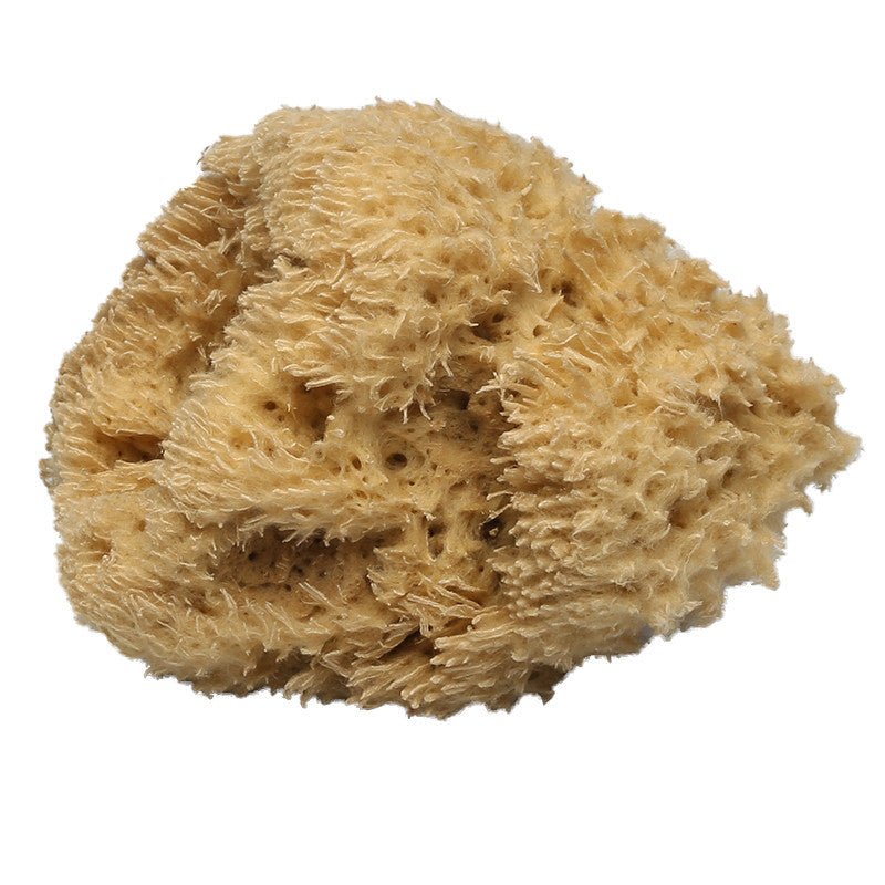 Wooly Body Sea Sponge