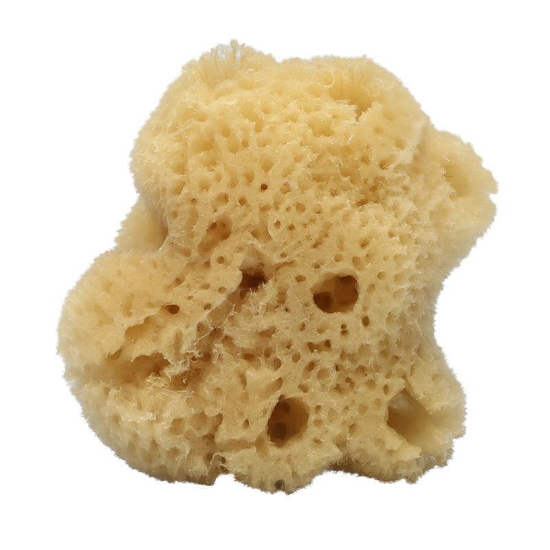 Silk Face Sea Sponge