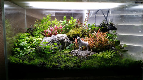 TERRARIUM TYPE with emergent aquarium plants