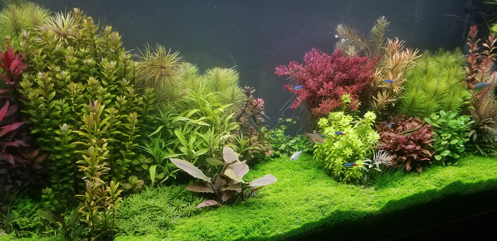 The Making of Pearlingplants' Planted Tank