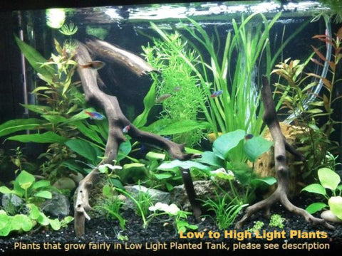 Low to High Light, 12 kinds, see Description for details, Freshwater Aquarium Plants