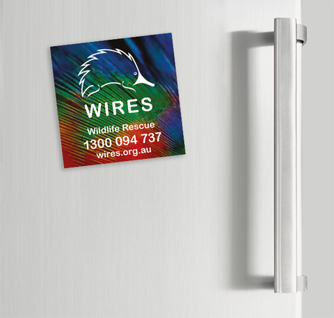 WIRE0024 - WIRES Fridge Magnets (Lorikeet Feathers)