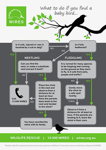 WIRE0006 - WIRES What to do if you find a Baby Bird Infographic - A4 Flyer / Poster