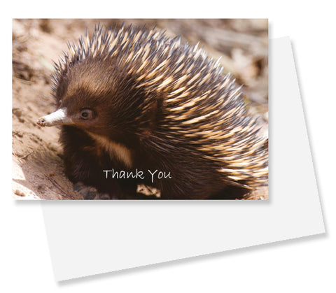 WIRE0004 - WIRES A6 Thank You Gift Cards (Echidna) with C6 Envelopes
