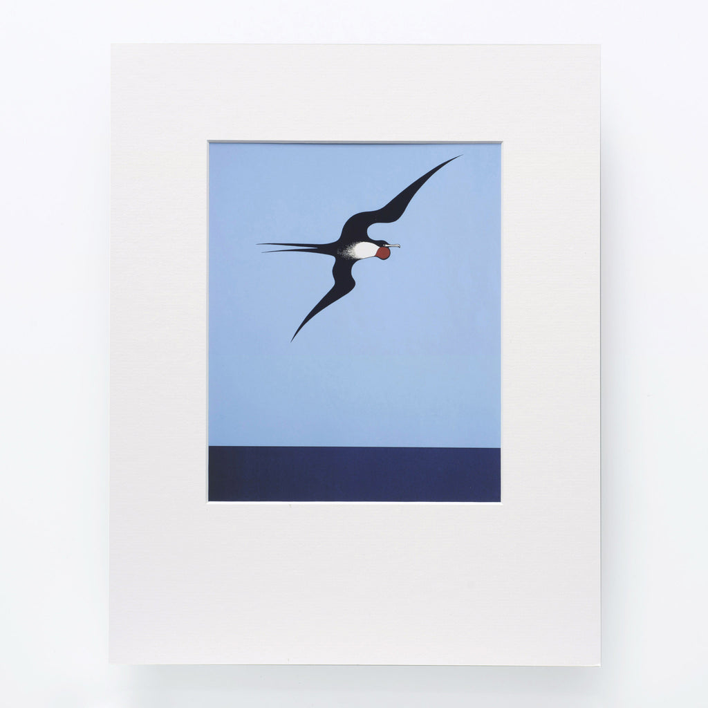Pacific Frigate Bird Print