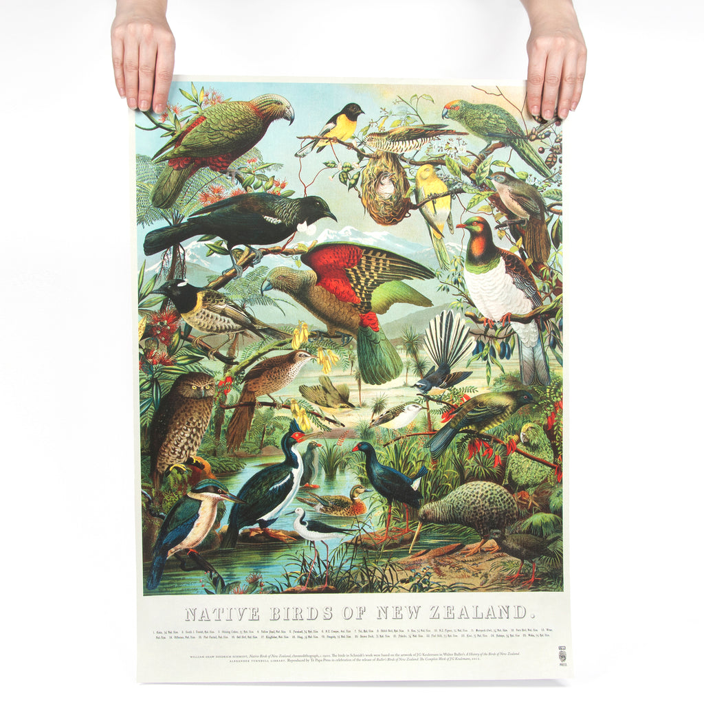 Native Birds Poster