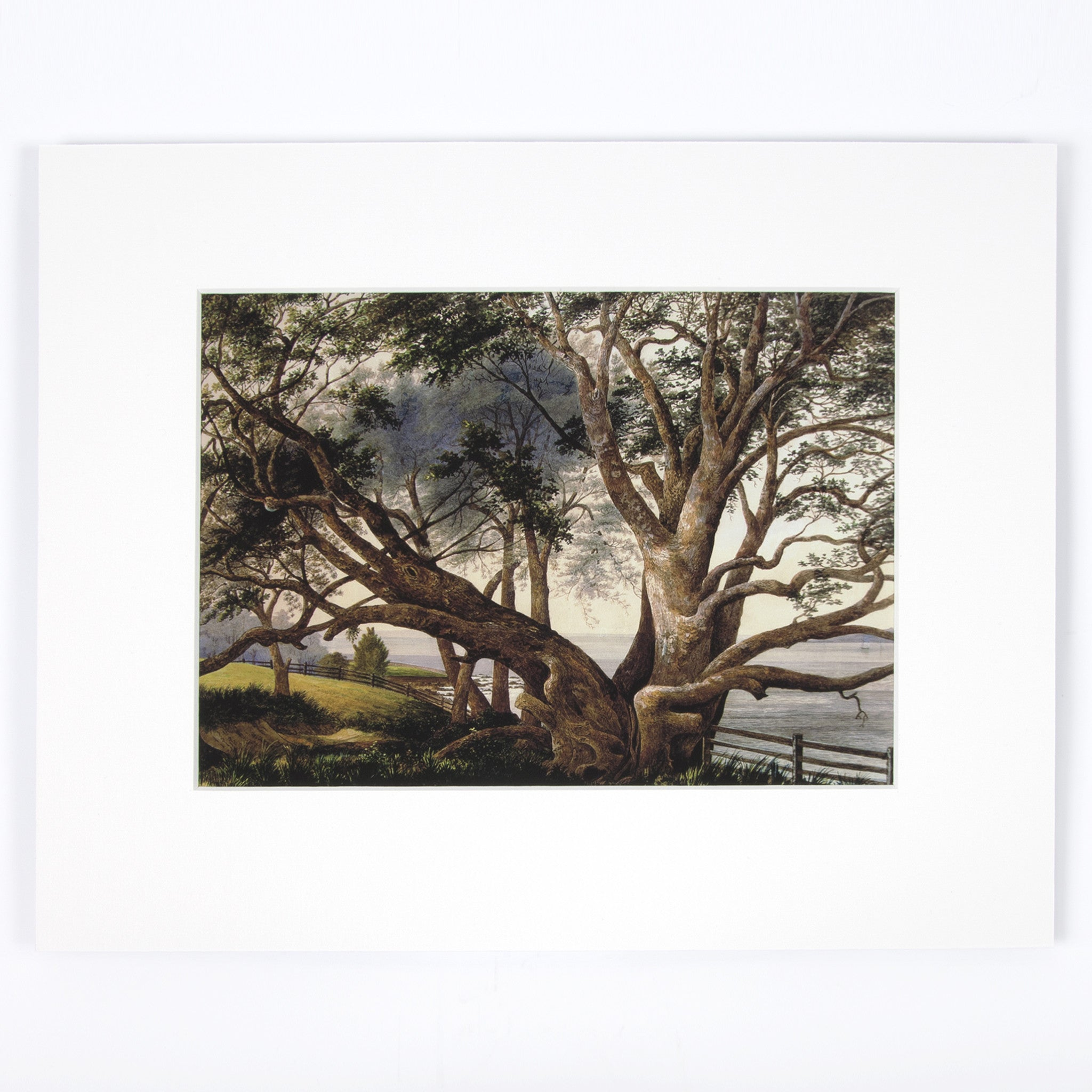 Pohutukawa, near the landing place Print Image