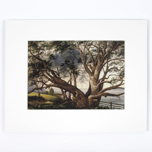 Pohutukawa, near the landing place Print