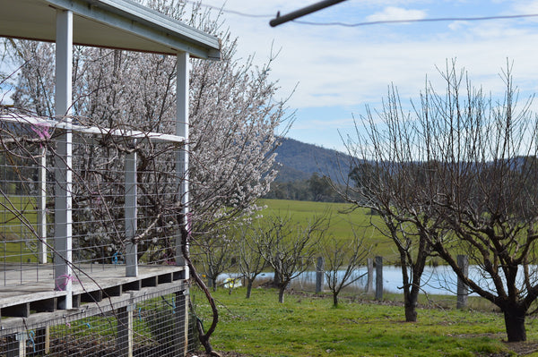 The farmhouse at Edi, King Valley