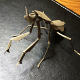Paper insects - USMANTIS - 26