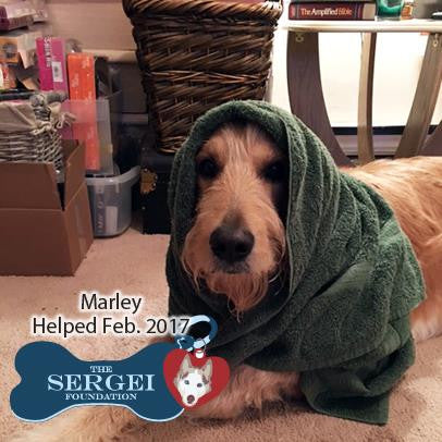 marley helped by Sergei Foundation