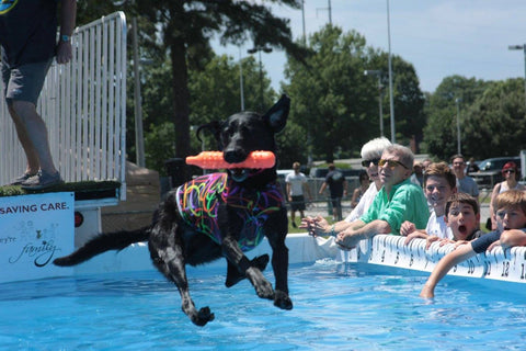 triad dog games - dog jumping into pool