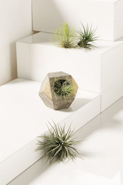 Diagona Planter