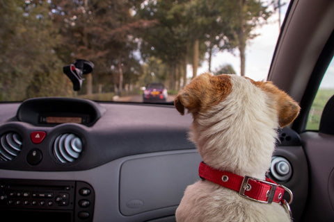 Dog in front car seat
