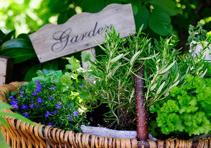 Home Decor: Turn a ginger jar into a herb garden