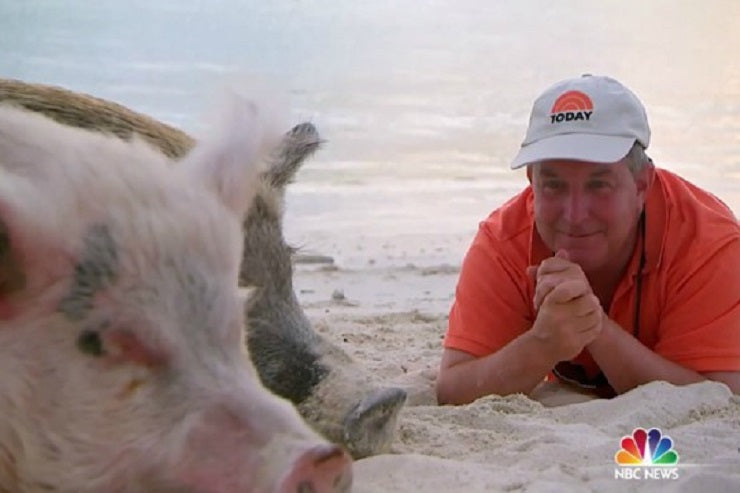 Check out the swimming pigs on The Today Show!