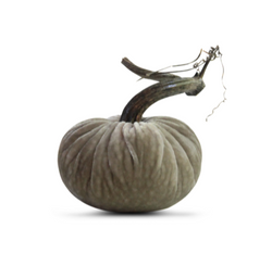 VELVET PUMPKIN - PUTTY