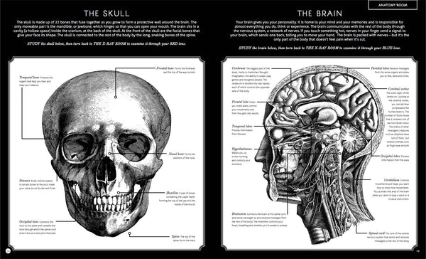 Book-ILLUMANATOMY