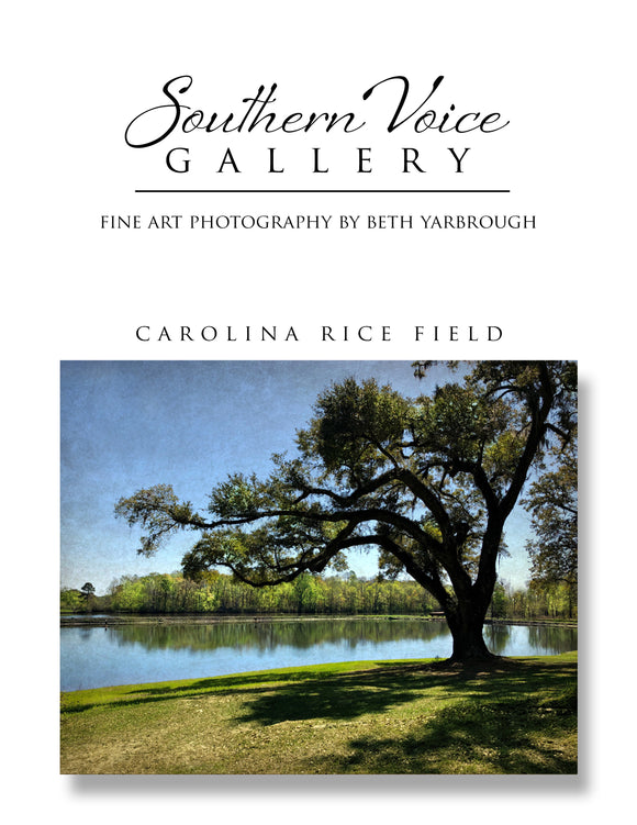 Artwork - Southern Voice Gallery - Waterways - Georgetown County Rice Field Fine Art Print