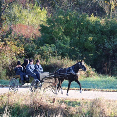 The Amish Scholars and Their Pony Cart
