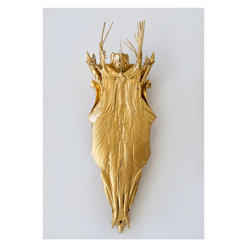 BARRACUDA SKULL, GOLD