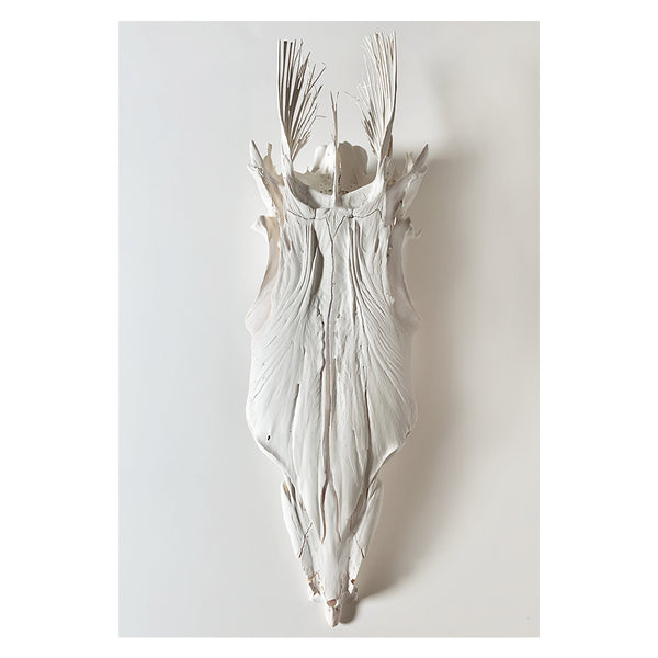 BARRACUDA SKULL, WHITE