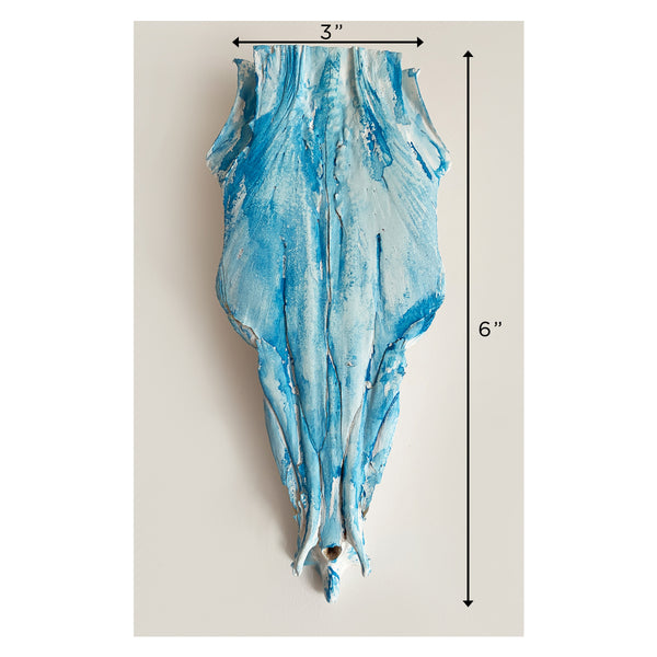 BARRACUDA SKULL, BLUE